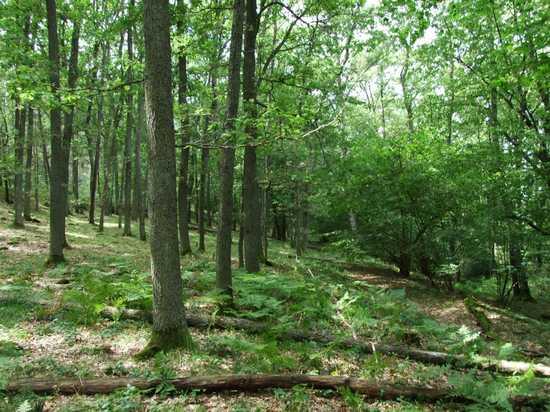 Las mieszany świeży