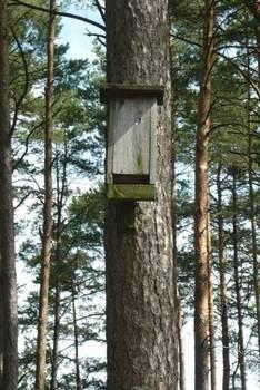 Drewniana skrzynka dla nietoperzy starego typu, fot. Maria Chybowska