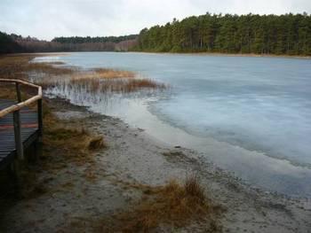 Jezioro lobeliowe Wielkie Gacno (fot. Maria Chybowska)