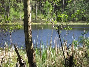 Jezioro dystroficzne Kacze Oko, Fot. Beata Grabowska