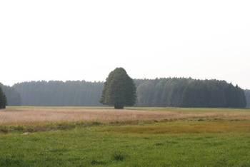 Przystanek Łąki fot. Magdalena Kochanowska
