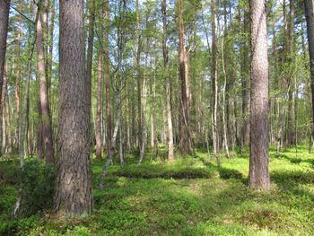 Ekosystemy lądowe