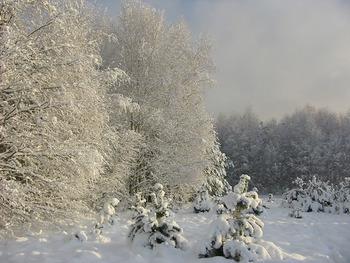 Zima w PNBT, Fot. Ewa Tokarska