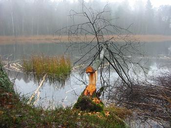 Jezioro Ostrowite, Fot. Ewa Tokarska