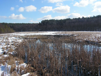 Jezioro Mielnica, Fot. Karolina Lubińska