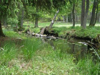 Struga Siedmiu Jezior, Fot. Karolina Lubińska