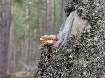 Monitoring chorób infekcyjnych lasu