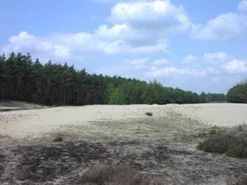 Murawy piaskowe fot. B. Grabowska