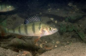 Podwodny świat jeziora Ostrowitego