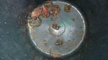 Pierwsi migranci- żaby trawne i moczarowe