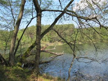 Przystanek  Jezioro Płęsno fot. Beata Grabowska