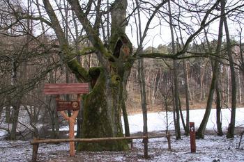 Przystanek Pomniki przyrody fot. Beata Grabowska