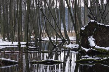 Struga Siedmiu Jezior zimą (fot. Maria Chybowska)