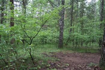 Eliminacja czeremchy amerykańskiej Padus serotina z powierzchni leśnej Parku