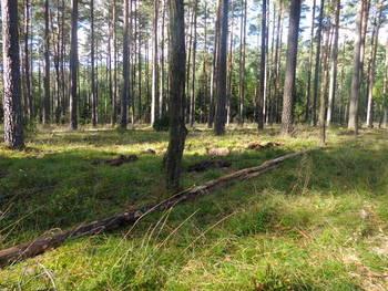 Dolna część ogrodzenia zabezpieczona żerdziami.