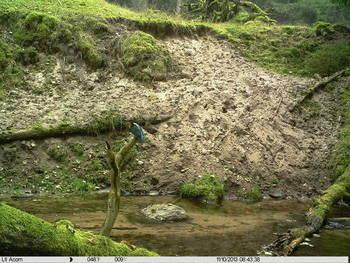 Monitoring korytarzy ekologicznych  przy pomocy fotopułapek