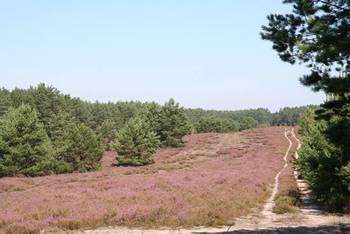 Czym jest Natura 2000?
