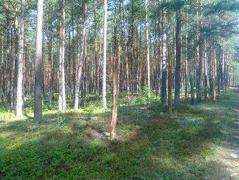 Ochrona podsadzeń w ekosystemach leśnych.
