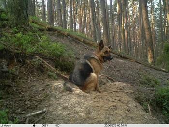 Groźne psy w Parku Narodowym