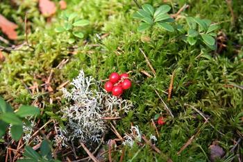 Leśne rośliny i grzyby