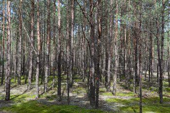 Drzewostan przed zabiegami, fot. M.Kochanowska