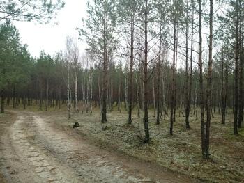 Drzewostan po wykonanych zabiegach fot. K.Lubińska