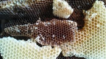 """Nowy sezon Czwartkowych spotkań z przyrodą – zapraszamy na wykład pt. """"Leśni pszczelarze"""""""