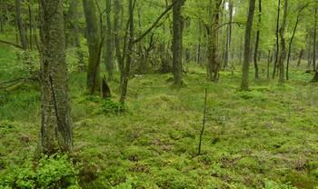 Różnorodność biologiczna jako odpowiedź na praktyki gospodarcze i ochronę przyrody w lasach – zaproszenie na wykład