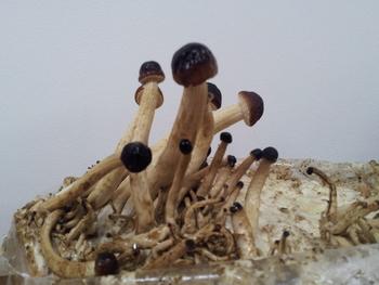 Zdrowie prosto z leśnych kapeluszy