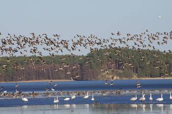 Wielkie poruszenie w świecie ptaków