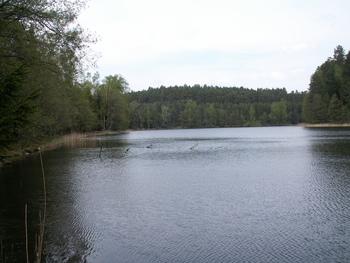 Jezioro Bełczak fot. W. Błoniarz
