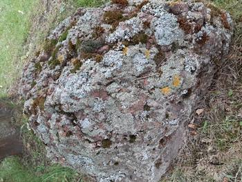 Kamień przy ścieżce pokryty pieknymi porostami fot. M. Kochanowska