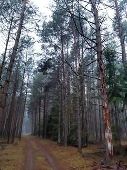 """Bezpieczeństwo na szlakach turystycznych i ścieżkach dydaktycznych Parku Narodowego """"Bory Tucholskie"""""""